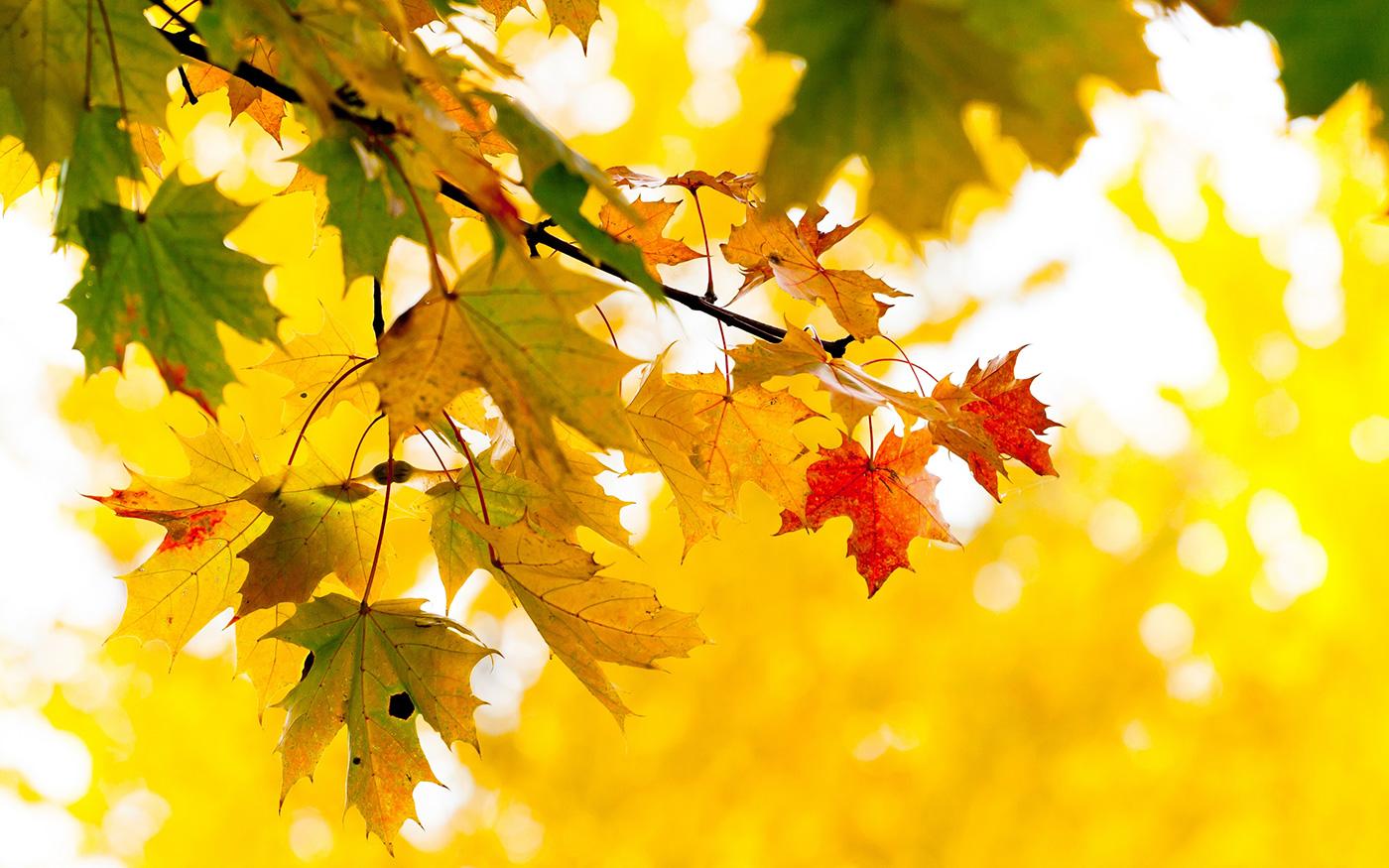 Строчки про осень